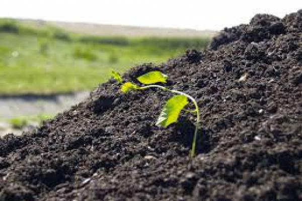 فروش عمده کود و خاک برگ خاک سبک-رشت