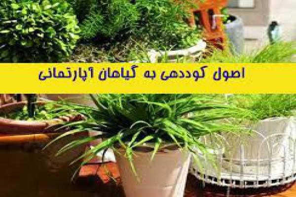 فروش کود گیاهان آپارتمانی-خرم آباد