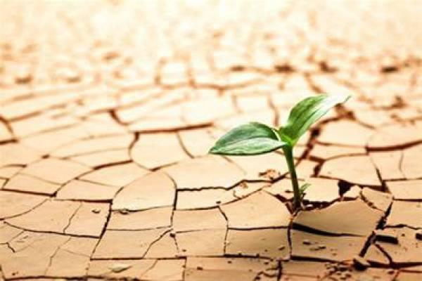 فروش خاک برگ و خاک کاکتوس - استان اصفهان