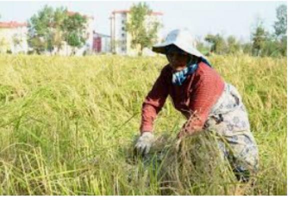 تولید و فروش انواع کود کشاورزی_ آذربایجان غربی