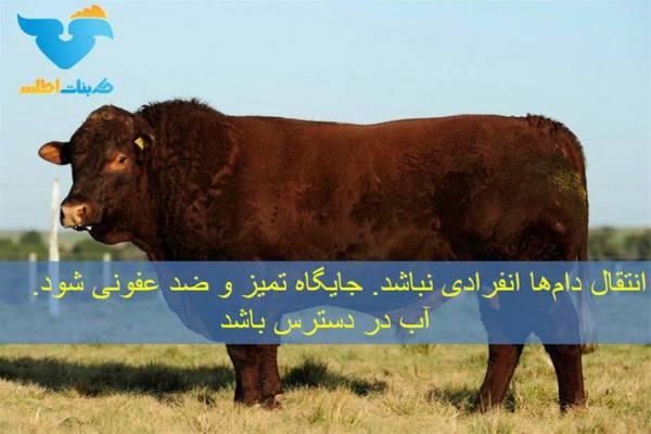 فروش کود گاو دپو شده گاوی -اصفهان