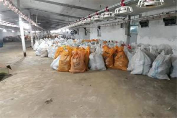 فروش کود مرغ  در گیلان