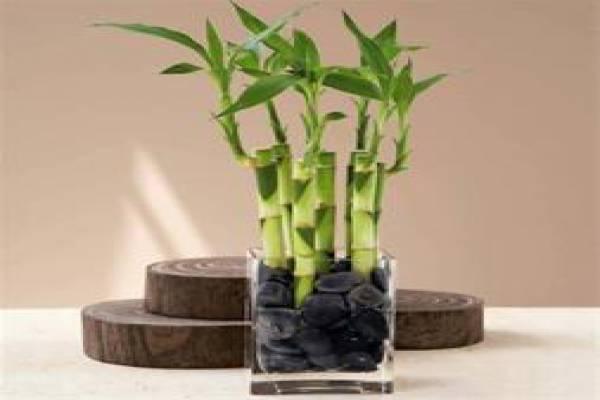 فروش خاک زغال چوب یک کود عالی برای گیاهان-تهران