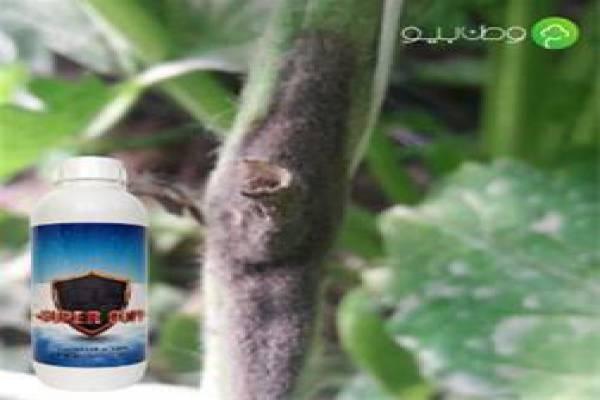 فروش کود گوجه فرنگی در تبریز