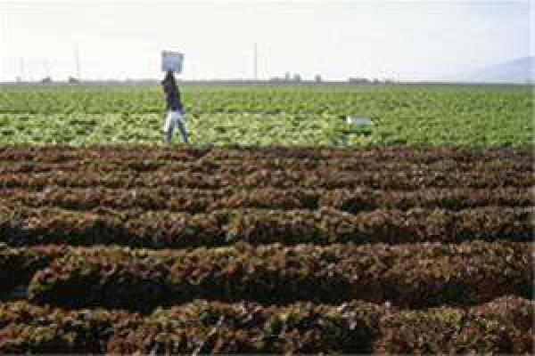 فروش کود کشاورزی در تهران