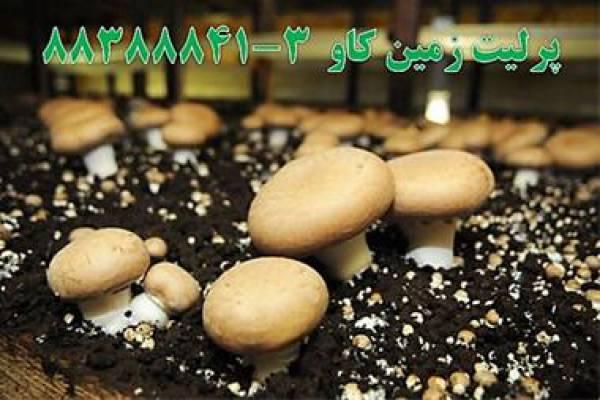 فروش پرلیت perlite پرورش قارچ در تهران