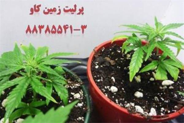 فروش پرلیت کشاورزی و باغبانی در تهران