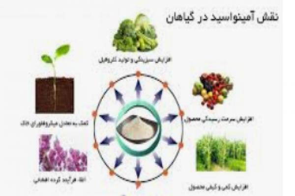 فروش کود مایع آمینو اسید _تهران