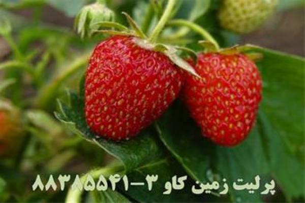 فروش پرلیت بستر کشت  در تهران