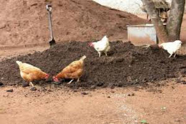 فروش کود مرغ -بویین زهرا