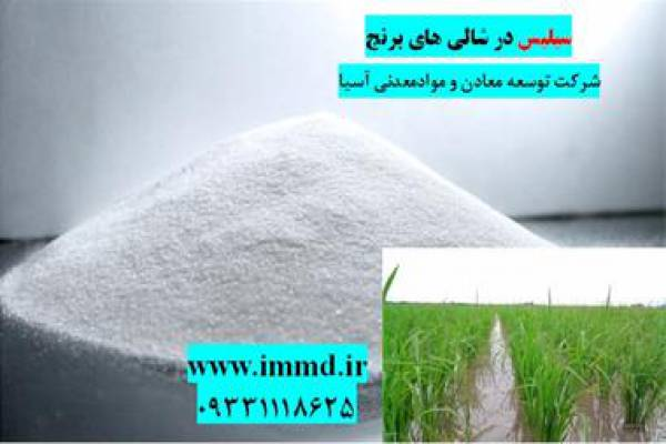 فروش کود سیلیس در تولید برنج طبیعی-تهران
