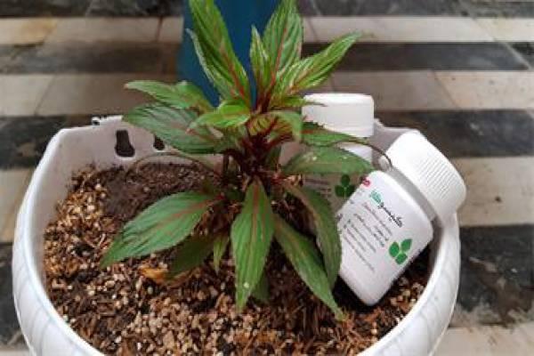 محرک رشد گیاه آپارتمانی در تهران