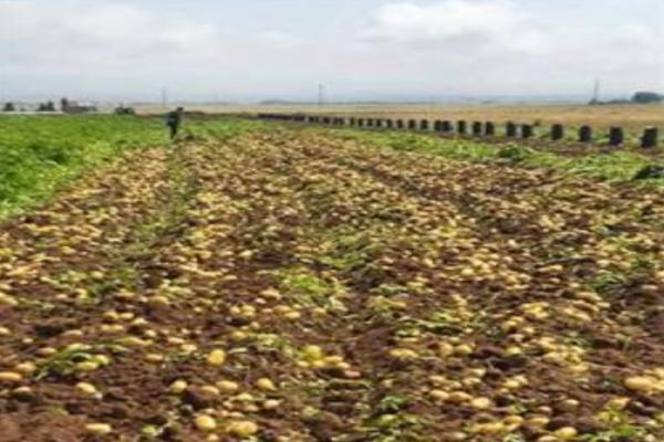 فروش انواع کود کشاورزی