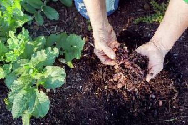 تولید کننده و توزیع کننده کمپوست و بذر قارچ-ارومیه