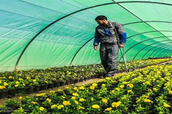فروش انواع کود ارگانیک و کود حیوانی و کود شیمیایی و سموم در ایران