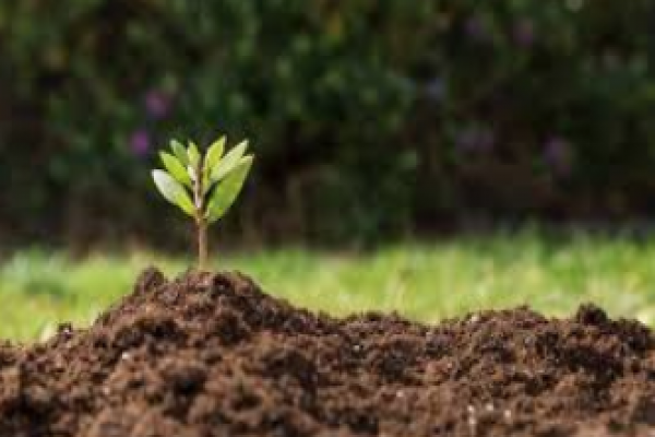 فروش عمده کود و خاک برگ- رشت