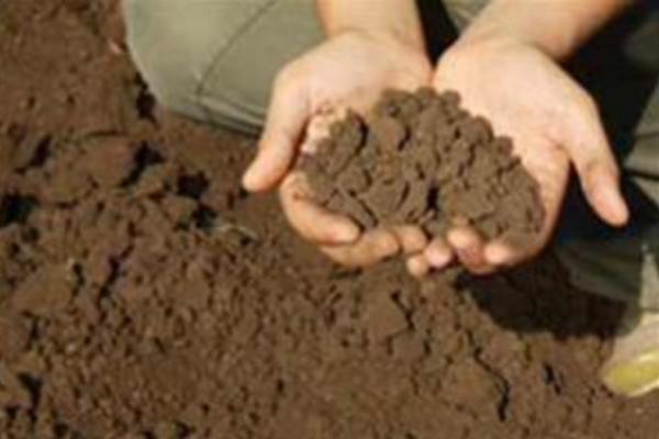 تاثیر ورمیکولیت درجه یک در حاصلخیزی خاک_ تبریز