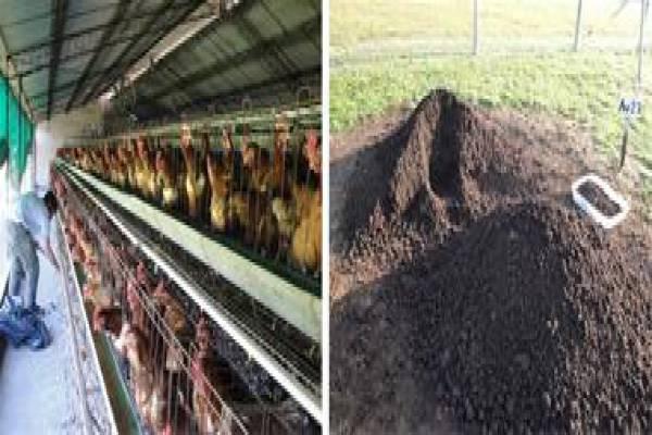 تولید و فروش کود پلت مرغی-گرگان